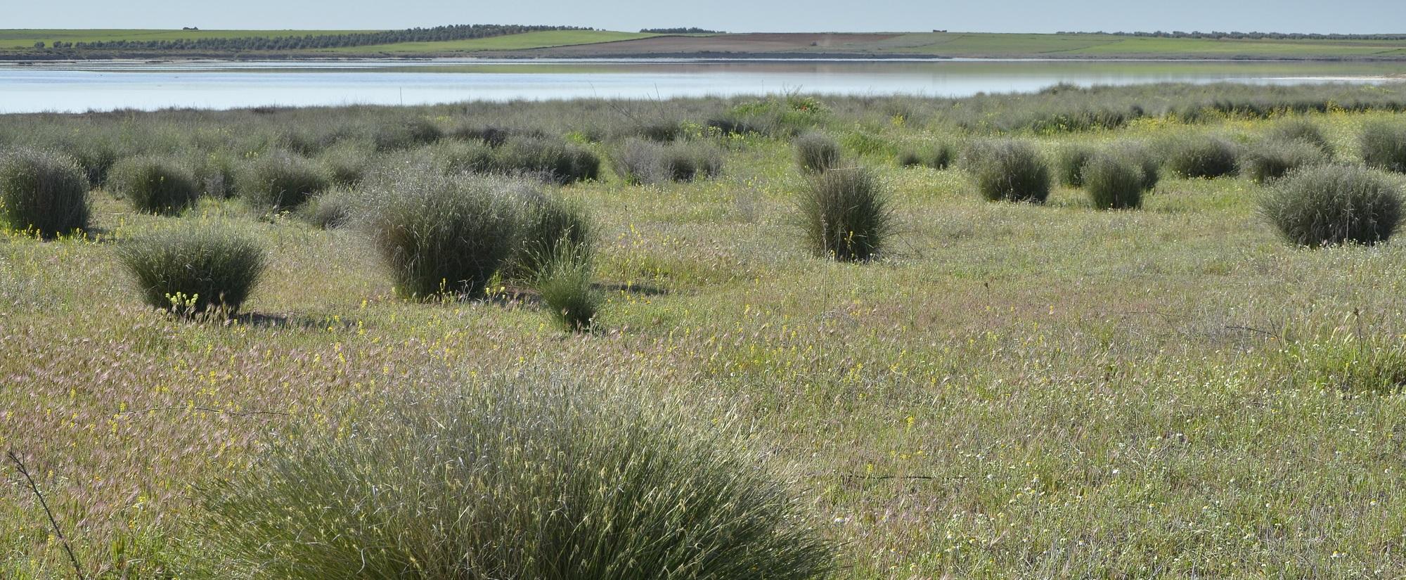 Laguna y pastizales salinos