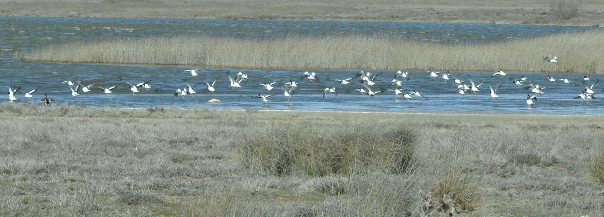 Aves acuáticas sobre las lagunas