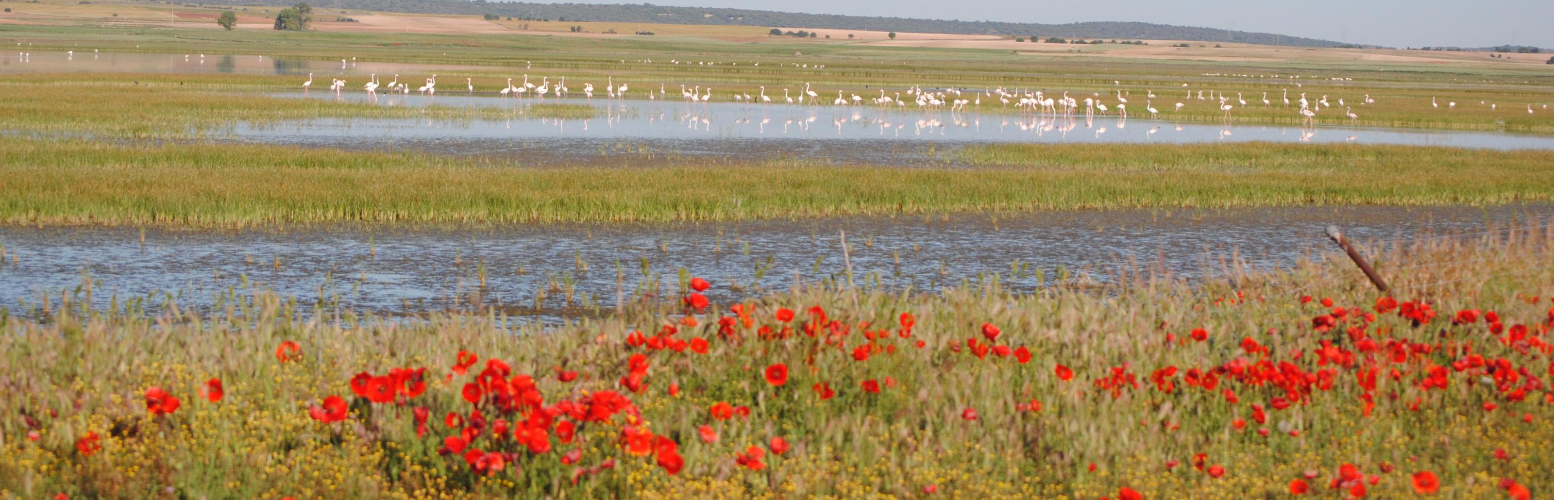 Laguna de El Hito en primavera