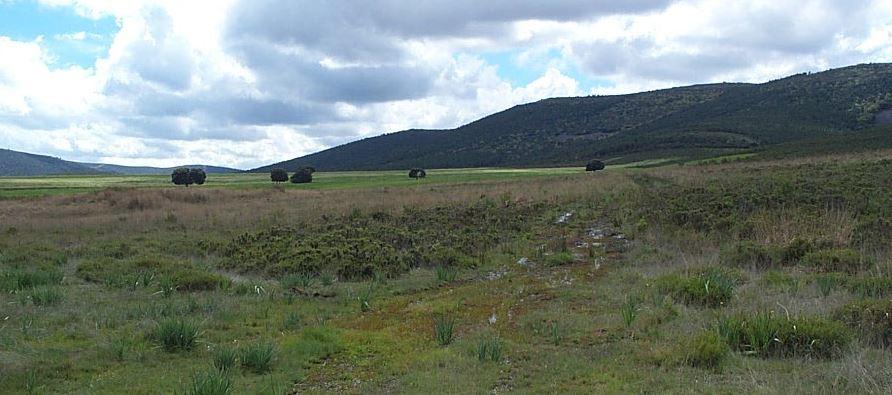 Vista general Bonal El Alcornocal
