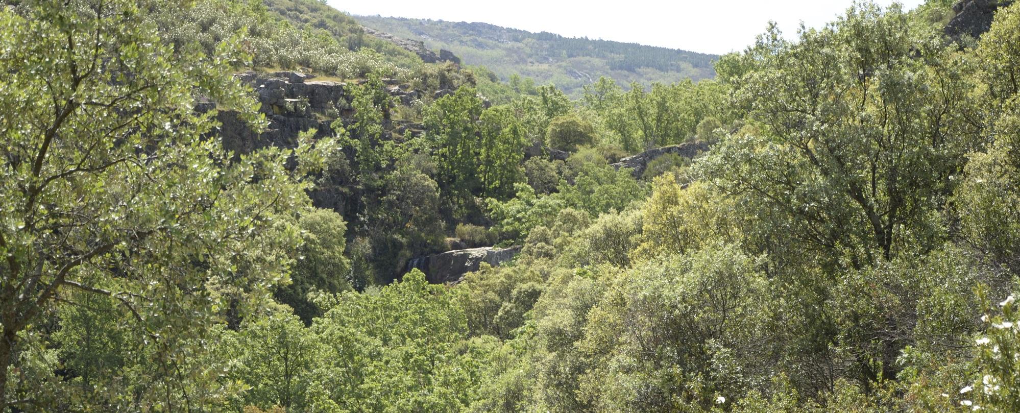 Microrreserva Garganta de las Lanchas | Áreas Protegidas de Castilla-La  Mancha