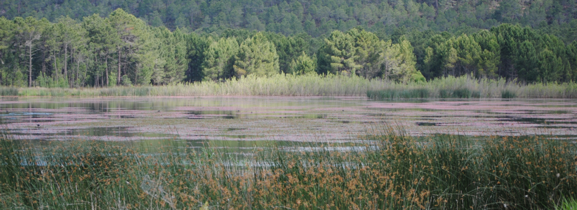 Laguna de Talayuelas a finales de la primavera