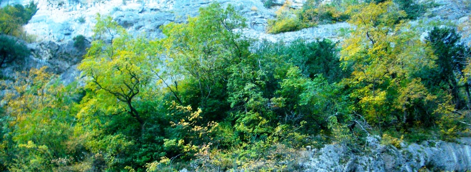Vegetación encaramada en los estratos rocosos
