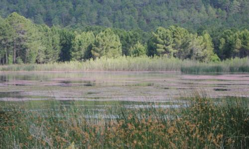 Laguna de Talayuleas a finales de la primavera
