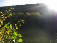 CONCURSO INFANTIL.Libélula 1.Héctor Fernández de las Heras.Tabla de la Hiedra. rio Bullaque. Red Natura 2000. Ciudad Real