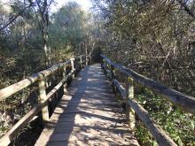 CONCURSO INFANTIL.Senda botánica Torre de Abraham.Alvaro Alcaide Rojas.Parque Nacional de Cabañeros. Ciudad Real