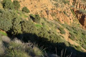 Vegetación de enebros y ephedras