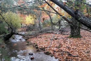 Paisaje fluvial Cabañeros