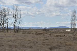 Pastizales salinos en la zona de la dehesa