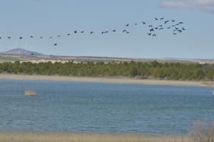 Cormoranes sobre la Laguna Grande