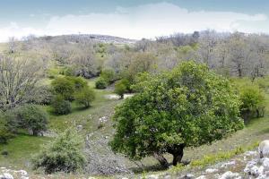 Bosque maduro de relevacia