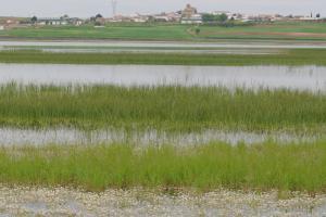 Laguna de El Hito