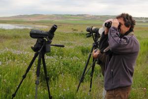 Observando aves en la laguna de El Hito