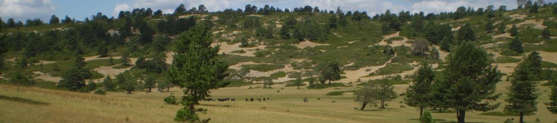 Rincón de Palacios (Zafrilla)