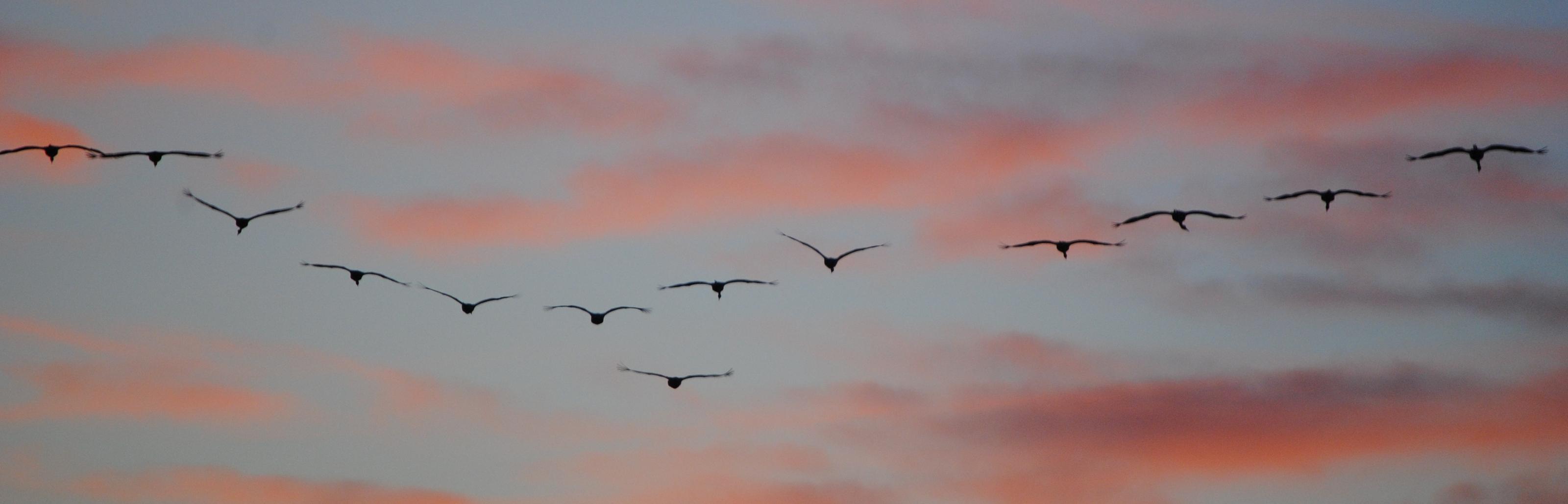 Grullas al anochecer en la laguna de El Hito